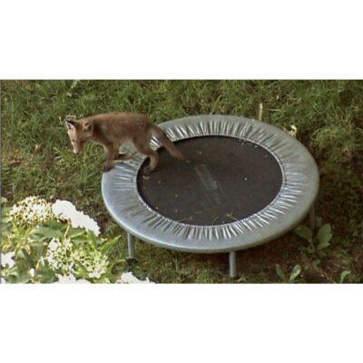Training Füchse Filmstill